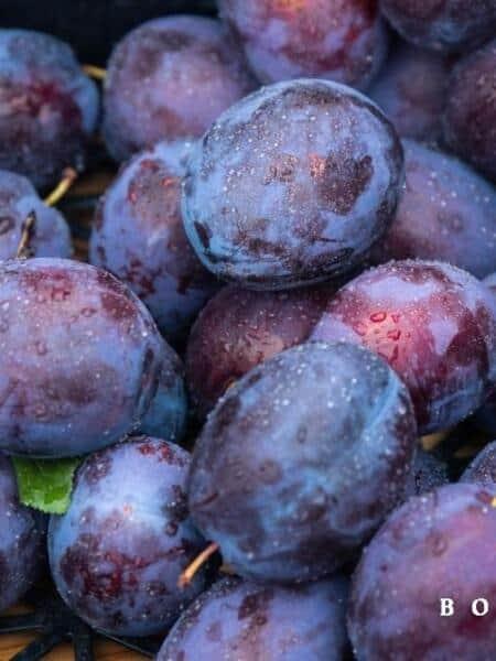 Prunus-d.-Reine-Claude-dAlthan