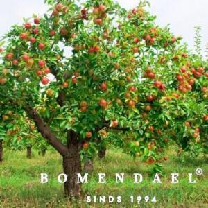 fruitboom-in je tuin